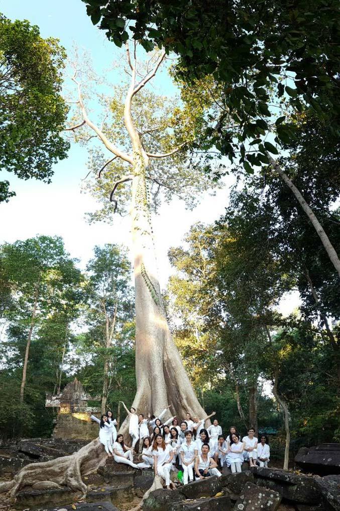 Golden Tree, Cambodia